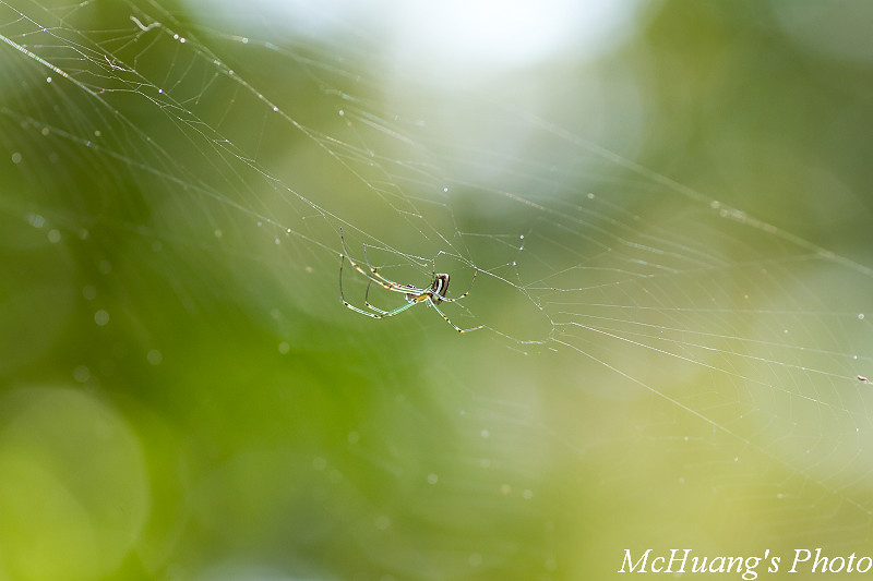拍不到蝴蝶只好拍蜘蛛