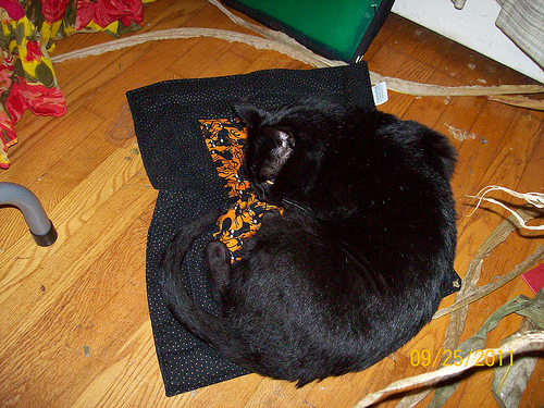 Tom enjoys his Halloween gift, a Pootie Pad!