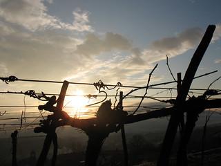 Večerno sonce / Evening sun