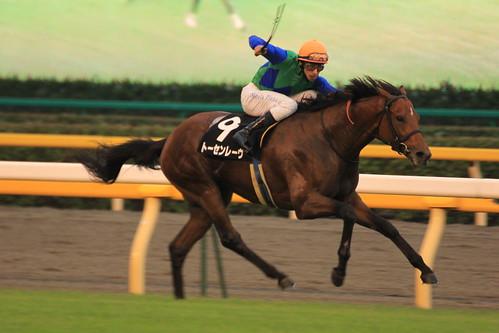11R勝ち馬 トーセンレーヴ(N.ピンナ)4 - 無料写真検索fotoq