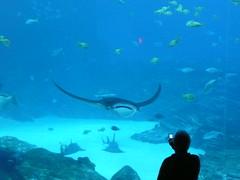 coral reef(0.0), sea(0.0), ocean(0.0), water sport(0.0), manta ray(1.0), fish(1.0), coral reef fish(1.0), marine biology(1.0), underwater(1.0), reef(1.0),