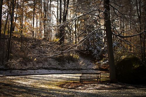 autumn winter forest scenery parkbench snowcolgateuniversitynaturewinter