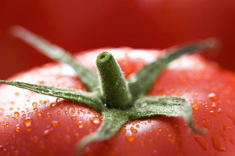 How to Grow Amazing Tomatoes and Vegetables using Garden Containers