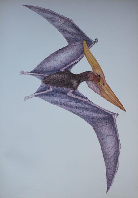 RIO_1974_Pteranodon
