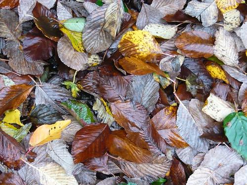 barrow Leaves