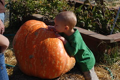 Inspecting the pumkin