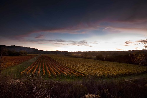 california sunset vineyard vines sonomacounty winecountry