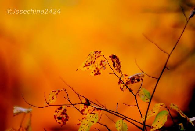 Tonos de este otoño