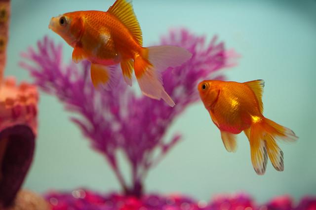 044 fish