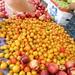 frutas por mi_tequila