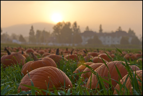 california autumn canon outdoors pumpkins socal 5d canon5d pomona canondslr inlandempire calpolypomona adifferentpointofview calpolypumpkinfestival aphotographersnature kenszok