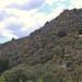 Mountain with columnar cacti - Cerro con cactus columnares entre Silacayoapan y Nieves Ixpantepec (Región Mixteca), Oaxaca, Mexico por Lon&Queta