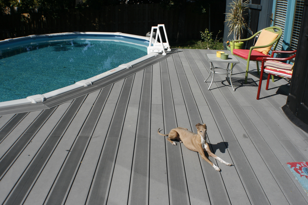 greyhound on bamboo composite deck