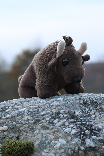 Buddy Bison in Western Maryland