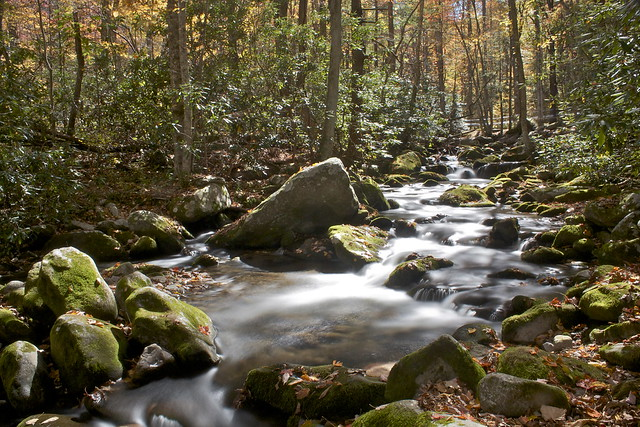 Brook at Great Smoky Mountains