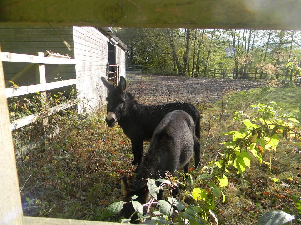 Donkey Sanctuary inmates Witley to Haslemere