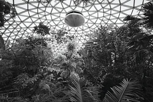 Inside Bloedel Conservatory