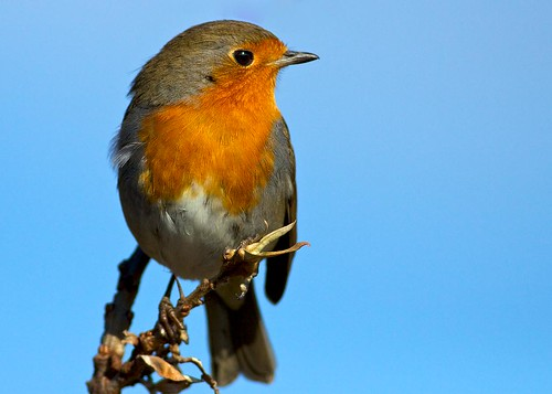 you can't beat a good robin shot
