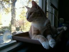 Hobbs on new window perch