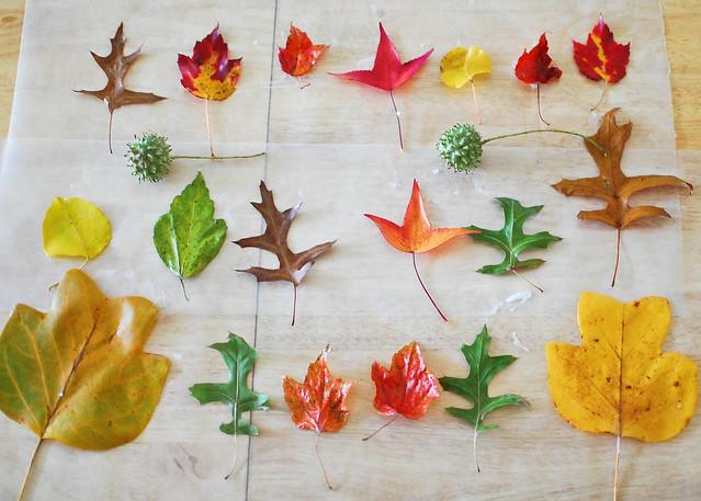 Fall Fun: An Idea Roundup for Kids AND Grownups | Pine Street Days
