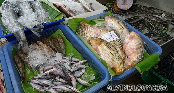 "Freshwater fish, not a favouite among Singaporeans due to the stronger ""fishy"" taste"