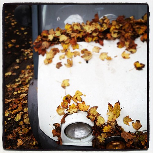 AUTUMN BUG EYE #london #wanstead #autumn #car #white