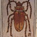 Prionus Californicus--Beetle ACEO woodblock print