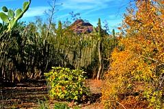 Desert herb garden