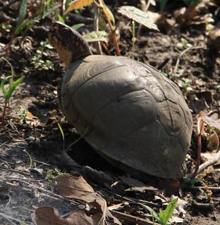 turtle328