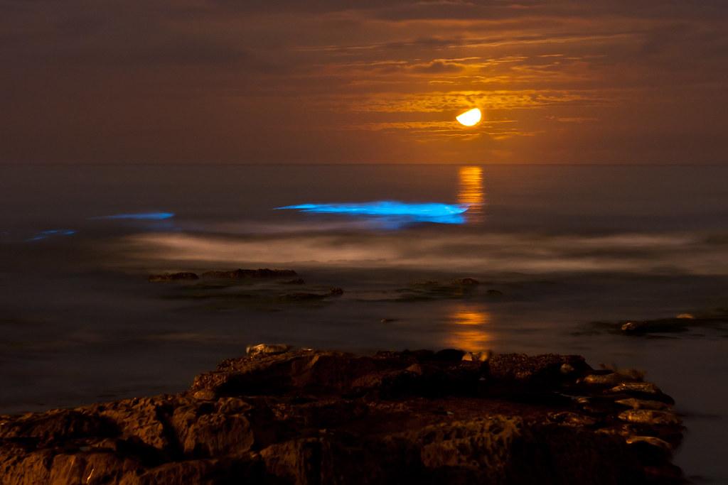 Red tide at night, red tide at night. Wo oh, wo oh oh oh oh oh oh oh. Bioluminescent tide at La Jolla Cove under a crescent moon.