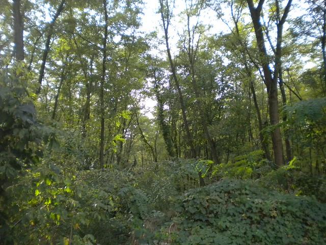 Nagyerdő de Debrecen