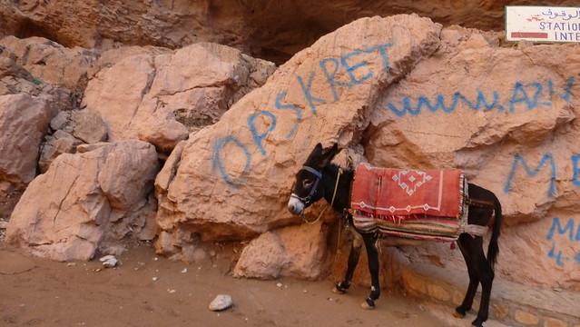 Header of Osel