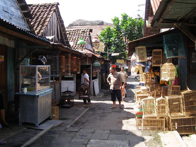鳥市場內有售賣各種類的鳥兒,還有許多用木材製造的鳥籠,設計也非常獨特。