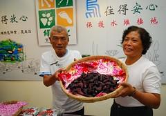 台南官田的農民為了守護大地及水雉,辛苦種出有機菱角。(圖片來源:林務局)