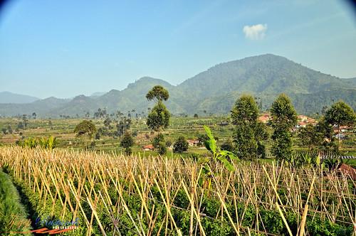 indonesia bandung nikkor d300 ciwidey teeje
