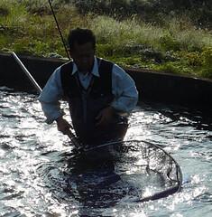 Hirasawa (Marusei) netting Koi