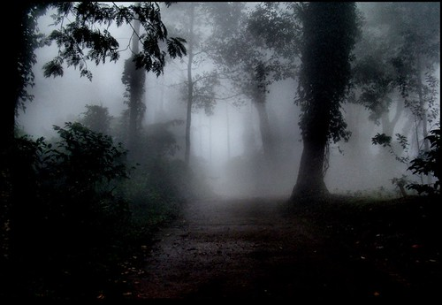 road trees mist art beauty leaves fog garden evening path breeze rosegarden yercaud