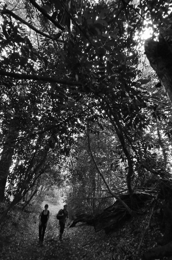 Woods #1
