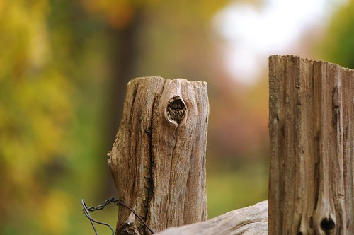 Autumn Fence-keh!