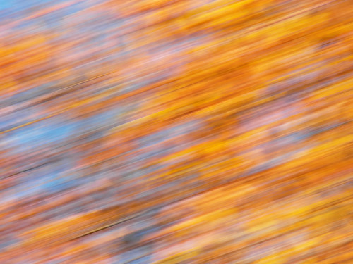 trees light plants usa plant motion color colour tree fall nature leaves leaf movement maine places sidney impressionist photoeffects kennebeccounty dinsmorerd