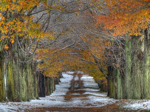 Snowy October morning in Millstone