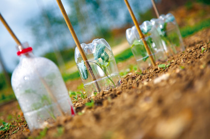 Maintaining Greenhouses in Fall and Spring