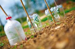 help plants grow