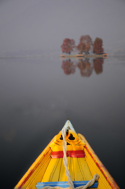 Dal Lake, Srinagar, Kashmir - A shikara boat heads for the Char Chinar