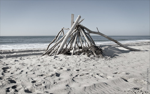 driftwood davis park by Alida's Photos