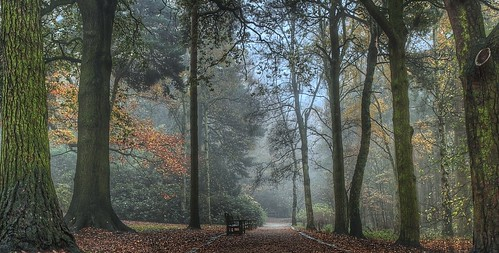 park autumn trees mist bench path seat leeds goldenacrepark