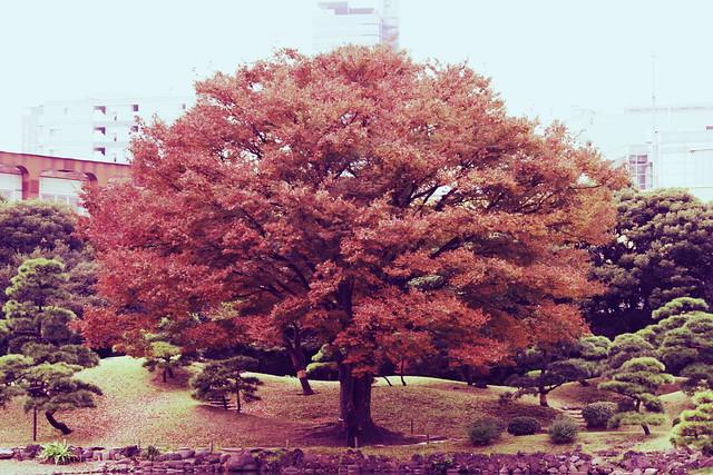 強制紅葉 / Force autumnal leaves with crossprocess-mode