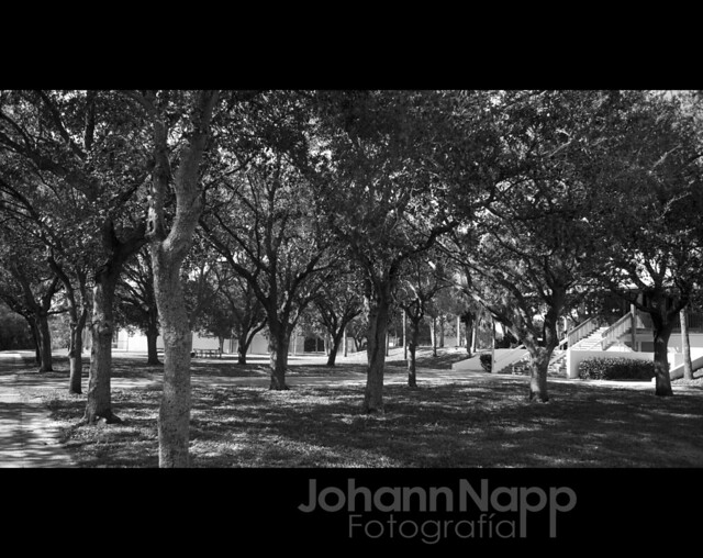"CB Smith Park, Florida - @ pembroke pines / florida  johann napp  <a href=""http://www.johannfoto.com"" rel=""nofollow"">www.johannfoto.com</a>"