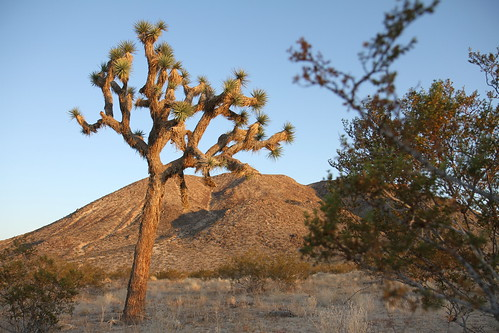 Desert Trip Nov 2011