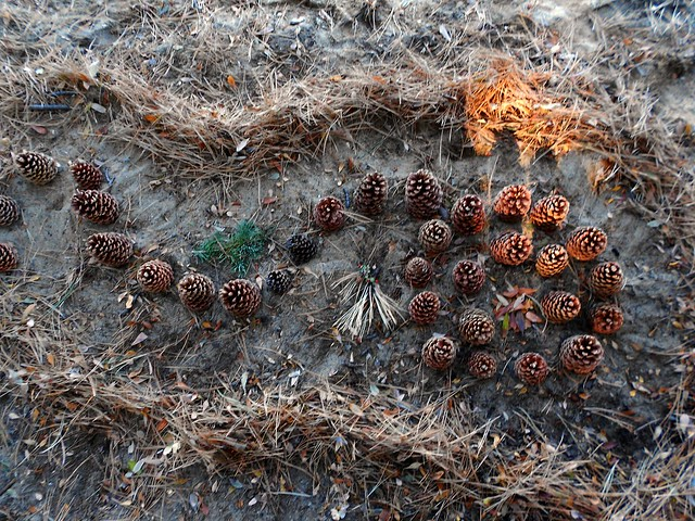 Pinecone - Andy Goldsworthy Style